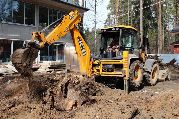 Фото процесса удаления пня дерева в Калининграде